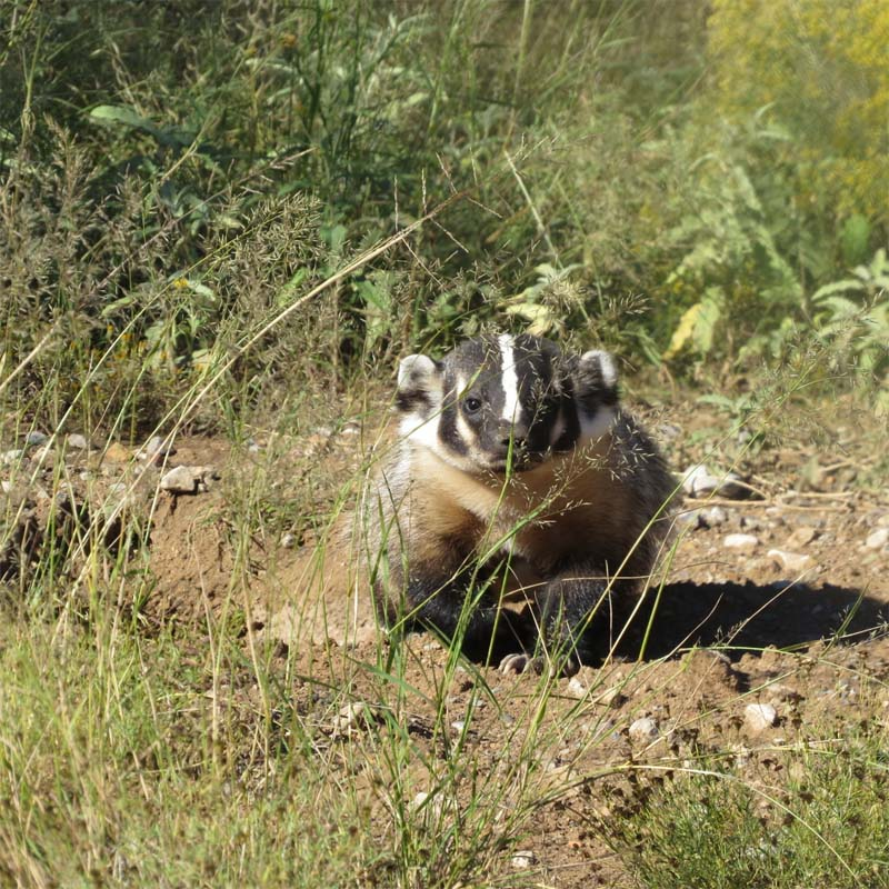 badger-2nd-shot-route-80-oct-1-2016-for-ws