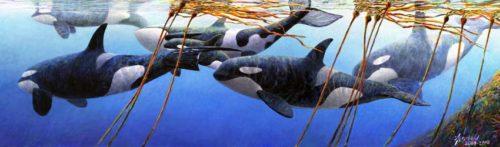 Orcas xl for ws April 2018