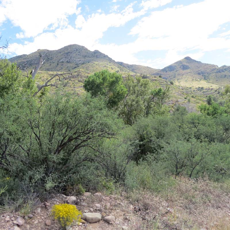 guadalupe-canyon-hills-for-ws