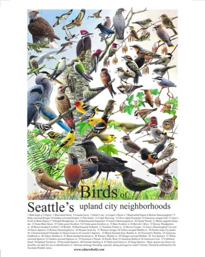 birds-seattle-miniposter-for-ws