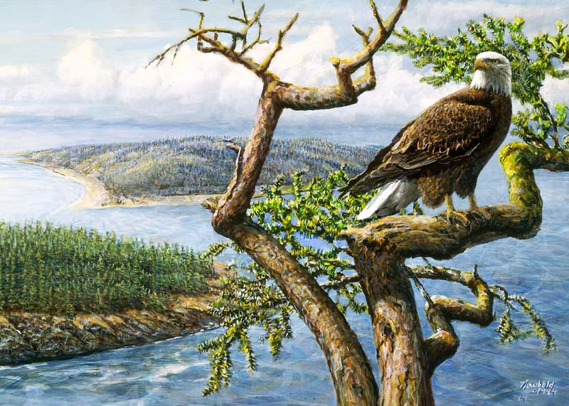 ed newbold 443 bald eagle perched over islands 12 x 16