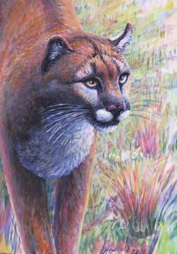 Cougar for 9 x 12 oct 26 2017 for ws