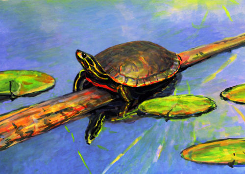 Turtle for 8 x 10 sept 25 2017 for ws